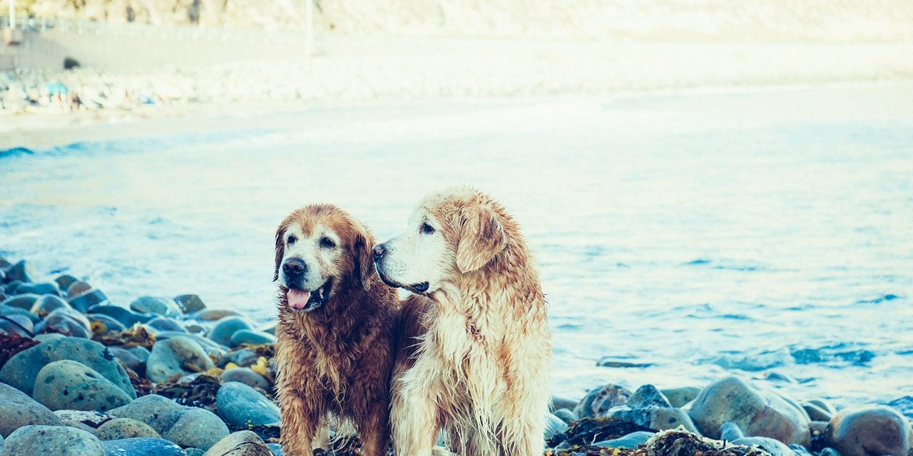 Top 5 Traits to Consider When Engaging a Dog Sitter for Your Holiday