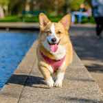 A Dog Is For Life: The Essentials To Think About